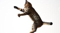13 curiosidades que não sabia sobre o seu gato