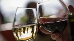Wine Fest. Um sábado dedicado ao vinho, no Porto