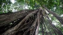 Nestlé testa sistema para ajudar a combater a desflorestação