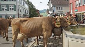 "Cidade suíça recusa nacionalidade a mulher por ser ""chata"""