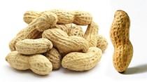 Em busca do amendoim não alérgico