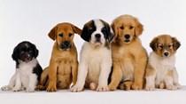 São Francisco proíbe venda de gatos e cães de criação em lojas de animais