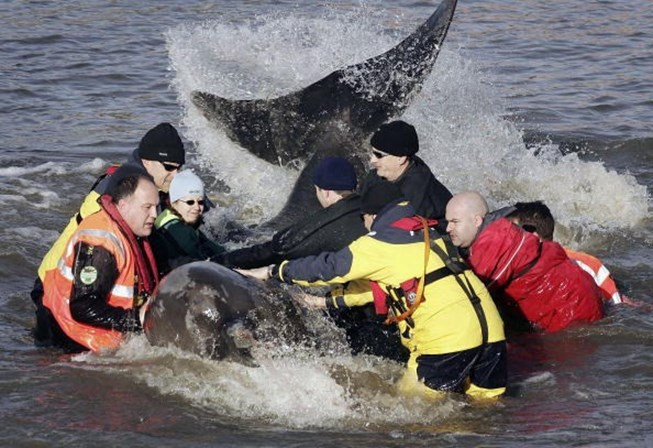 Homem morre enquanto tenta salvar baleia