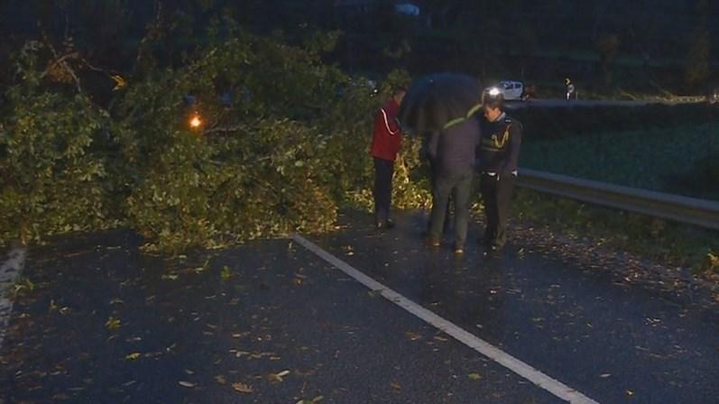 Tempestade Ana: queda de árvore mata mulher em Marco de Canaveses
