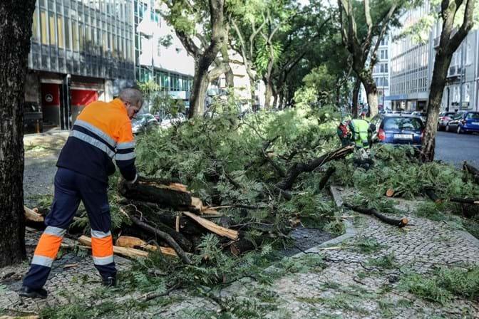 Meteorologia. Centenas de quedas de árvores devido à tempestade Ana