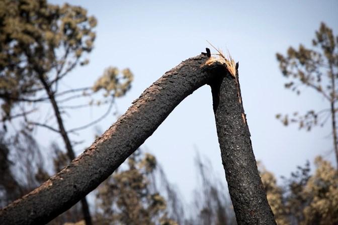 Em 2017 arderam mais 100 mil hectares do que se pensava