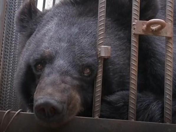 Família adota urso pensando ser cachorro e só descobre após 2 anos