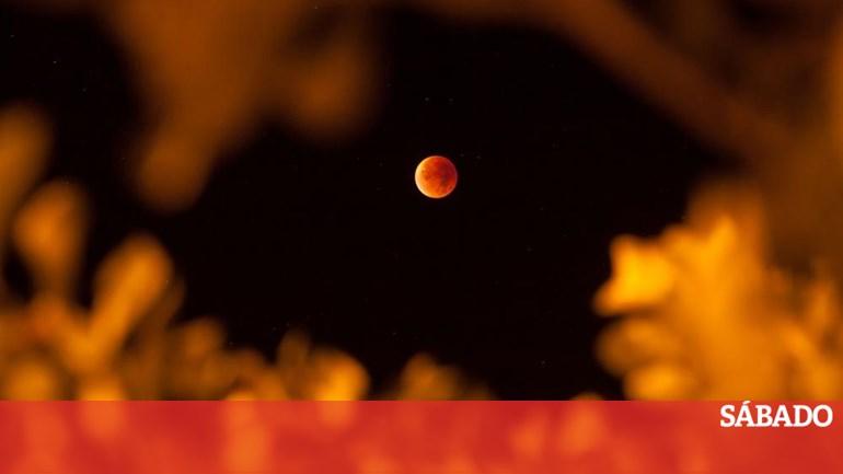 43f3aae4f Veja em directo o maior eclipse total da Lua deste século - Ciência & Saúde  - SÁBADO