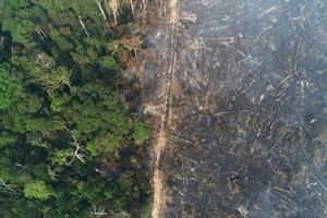 Só 2% a 3% do planeta permanece ecologicamente intacto