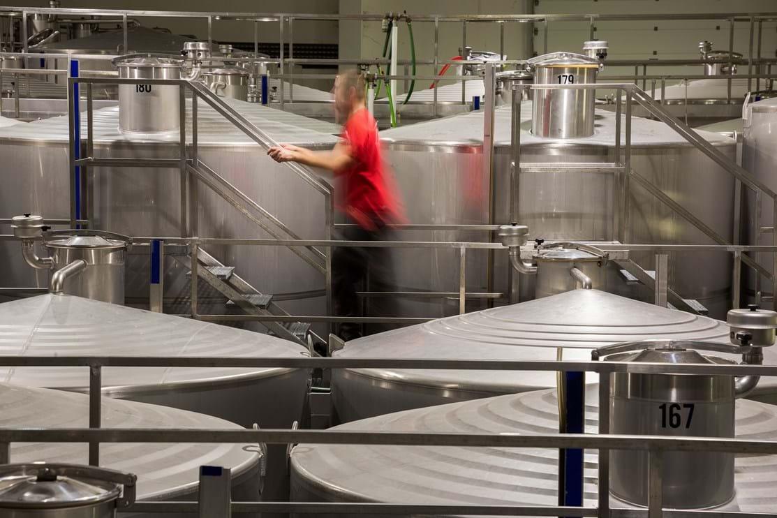 A zona de vinificação da adega da empresa tem capacidade para 21 milhões de litros de vinho